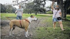 ??  ?? Sally Montgomery and Travis Vermaak take their dog Buddy for a walk in Delta Park.