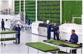 ??  ?? La granja vertical cuenta con un millón de puntos de siembra. Las plantas están listas para ser recolectadas en diez días y cada jornada se lleva a cabo una cosecha.