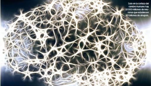 ??  ?? Solo en la corteza del cerebro humano hay 10 000 millones de neuronas que establecen 60 billones de sinapsis.