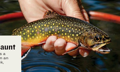??  ?? A small trout, caught in a wild, unspoiled setting, can be an enormous source of escape and relief.