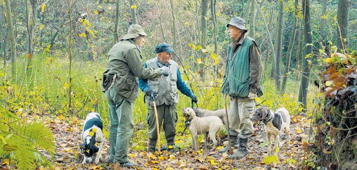 ??  ?? Viel los in den Wäldern des Piemont: Trüffelsucher haben sich viel zu erzählen; nur was die besten Plätze für Trüffel betrifft, bewahrt jeder sein Geheimnis.