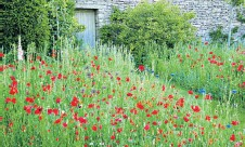 ??  ?? Most gardens can accommodate a patch of red poppies and blue cornflowers
