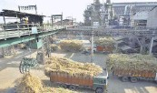 ??  ?? A file photo of hydraulic cranes lifting sugarcane from trucks for processing at the ethanol plant at the Simbhaoli Integrated Sugar Complex in Simbhaoli, Uttar Pradesh. AP