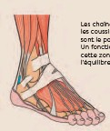??  ?? Les chaînes myofasciales et les coussinets sous les orteils sont le point de force du pied. Un fonctionnement correct de cette zone est nécessaire pour l'équilibre de la posture.