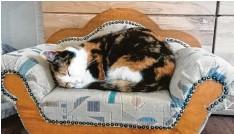 ??  ?? Besonderer Schlafplatz: Krümel schlummert tief und fest auf ihrem eigenen kleinen Sofa. Aufgenommen hat das Foto Besitzerin Kerstin Fritsch aus Oberndorf am Lech (Landkreis Donau‰Ries).