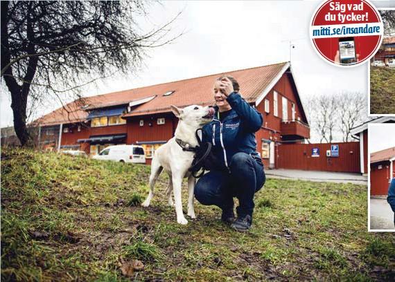 ?? FOTO: MIKAEL ANDERSSON ?? MUTAS. Tvååriga Clifford belönas med köttbullar av stallchefen Jenny, som har arbetat på Hundstallet i 30 år och i jobbet träffat flera tusen hundar.