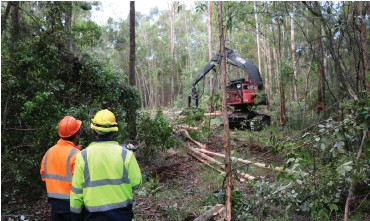 ??  ?? Recording tree diameter class and timing during mechanical treatment, NSW trial site.