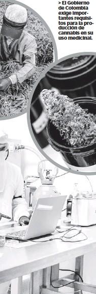 ??  ?? > El Gobierno de Colombia exige importantes requisitos para la producción de cannabis en su uso medicinal.