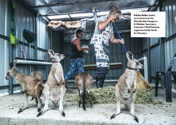 ??  ?? Adrina Selles cleans an enclosure at the Wandandian Kangaroo & Wallaby Sanctuary. Volunteer Mel Whiteside organises bottle feeds for the joeys.
