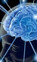 ??  ?? Studio Il cervello, rete di connessioni