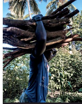 ??  ?? A man carries a bundle of wood to a ylang-ylang distillery on Anjouan which has experienced significant deforestation
