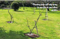 ??  ?? Planting trees will help bring in more birds and other wildlife