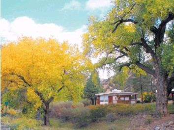 ?? COURTESY OF USDA FOREST SERVICE ?? Changing fall colors in the Jemez Mountains, in the Santa Fe National Forest.