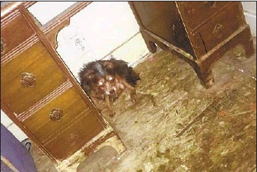 ?? Photographs by Riverside County Animal Services ?? RIVERSIDE COUNTY authorities found dozens of dogs in the Coachella home of Deborah Culwell. Despite the home's filth, many canines appeared to be somewhat healthy but some were aggressive or fearful, they say.
