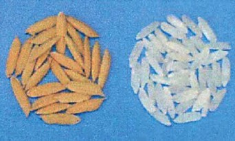 ??  ?? This is another high-yielding inbred or OPV rice variety that can be grown both in the dry and wet seasons with high yield.