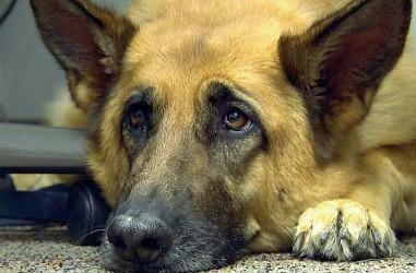 ??  ?? Canile Un dipendente infedele ha sottratto 20mila euro alla Lega per la difesa del cane