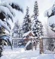 ?? FOTO: IVONA SCHMIDT ?? Winterwelt im heimischen Garten.