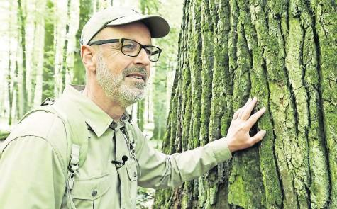 """?? FOTO: CONSTANTIN FILM/DPA ?? Peter Wohlleben in einer Szene des Films """"Das geheime Leben der Bäume"""", der morgen in den Kinos anläuft."""