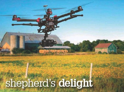 ??  ?? Left: New research shows that using a drone to shepherd sheep can be a less stressful experience for the animals