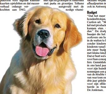 Pressreader Het Belang Van Limburg 2017 03 13 Honden Krijgen