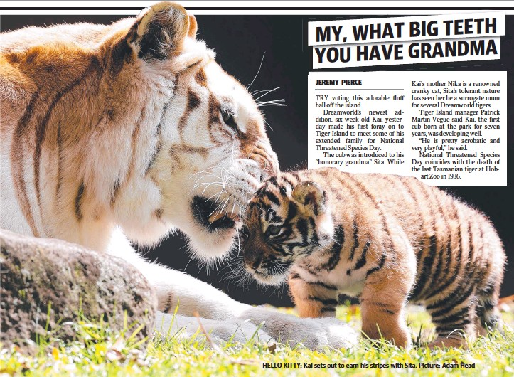 ??  ?? HELLO KITTY: Kai sets out to earn his stripes with Sita. Picture: Adam Head