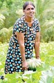 ??  ?? SADP Plus graduate Kamala Devi harvesting pumpkins grown on her own land