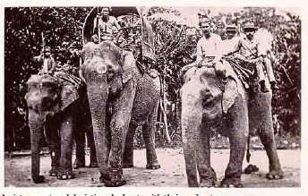 ??  ?? A picture postcard depicting elephants with their mahouts.