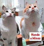??  ?? Nando e Minou