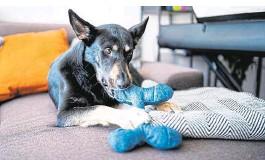 ??  ?? Hunde kauen gerne: Das Spielzeug sollte also robust und bissfest sein
