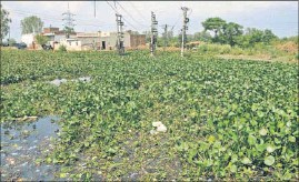 ??  ?? Power transformers installed in the middle of a pond at Feroz village on the outskirts of Jalandhar. The village panchayat has not been able to get the land vacated even after winning the case in April last year in the court of the district development...