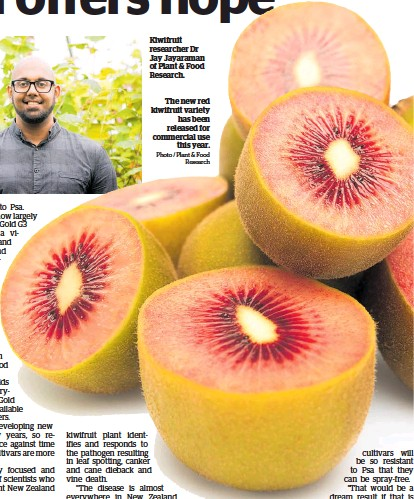 ?? Photo / Plant & Food Re­search ?? Ki­wifruit re­searcher Dr Jay Ja­yara­man of Plant & Food Re­search.