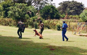??  ?? Police officers train a dog