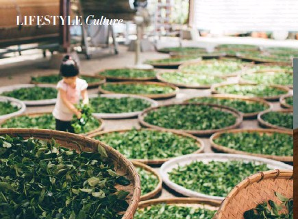 ??  ?? Above: A little girl helps to spread tea leaves out to dry at a plantation in Taiwan