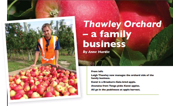 ??  ?? From left: Leigh Thawley now manages the orchard side of the family business. Kanzi is a Braeburn-gala-bred apple. Atunaisa from Tonga picks Kanzi apples. All go in the packhouse at apple harvest.