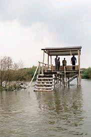 ?? GALIH ADI/JAWA POS ?? MELALUI DUA WILAYAH: Dermaga baru di kawasan mangrove Gunung Anyar Tambak yang siap melayani pengunjung menikmati rute baru. Foto atas, pos pantau di tengah jalur.