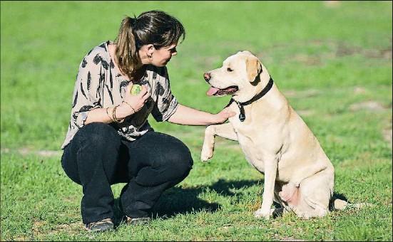 ?? INGRID RAMÓN ?? El Blat, un encreuament de retriever del Labrador i pit bull de tres anys, juga amb Ingrid Ramón, especialista en gossos d'assistència i detecció