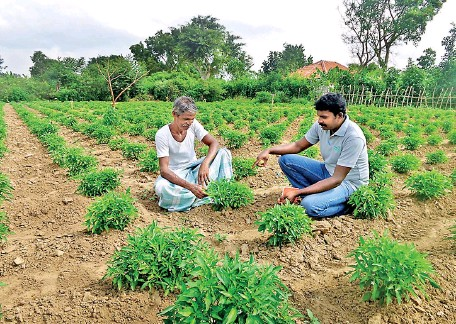 ??  ?? A farmland in the north. Sri Lanka's economy has been downgraded by the World Bank.