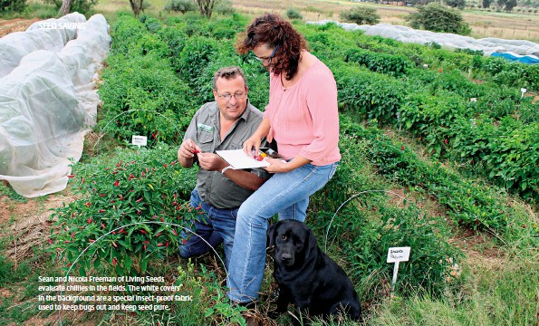 ??  ?? Sean and Nicola Freeman of Living Seeds evaluate chillies in the fields. The white covers in the background are a special insect-proof fabric used to keep bugs out and keep seed pure.