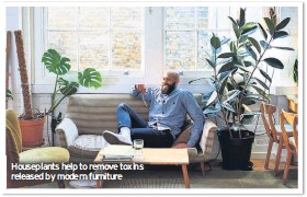 ??  ?? Houseplants help to remove toxins released by modern furniture