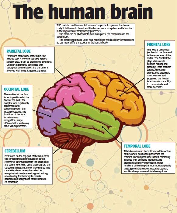 Pressreader Tweed Daily News 2018 06 02 The Human Brain