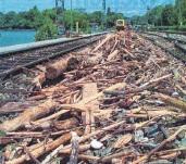 ?? FOTO: SAMMLUNG DAHLHAUS ?? Nach dem Sturm am 2. Juni 1999 liegen mehrere Tonnen Schwemmholz auf dem Bahndamm und blockieren die Gleise.