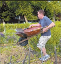 ??  ?? At the Wednesday weekly garden event at Waters Community Garden, Arunas Statkus (above) gets exercise carrying a wheelbarrow while Maria Dmyterko-Stone and Jennifer Slosar (above, middle) do some weeding and Adam Riggen (above, top) selects a rake for...
