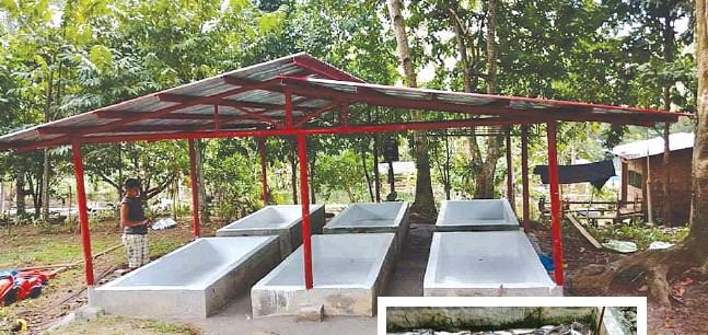 ??  ?? Lindo's farm is located in an area heavily populated by hito growers so he decided to adapt to the market as well. (Inset) For its first harvest, Lindo's farm amassed a total of 5,000 kilos of catfish.