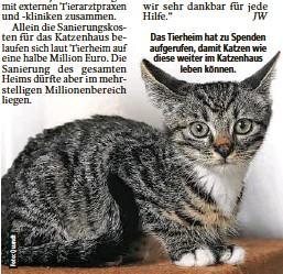 ??  ?? Das Tierheim hat zu Spenden aufgerufen, damit Katzen wie diese weiter im Katzenhaus leben können.