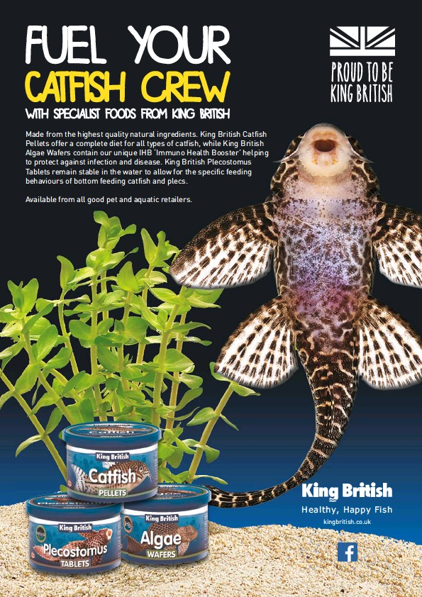 pressreader practical fishkeeping uk 2018 04 01 fuel your