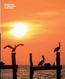??  ?? Pelicans gather by Yalahau lagoon on Isla Holbox