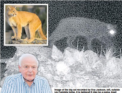 602e2046501f PressReader - Daily Express  2018-09-29 - British  puma  caught on ...