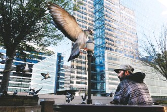 ?? MATT MCCLAIN/THE WASHINGTON POST ?? Vijay Kumar Makwana feeds bread to pigeons in Arlington. Pigeons love hard surfaces after evolving in North Africa and the Mediterranean Sea, where the birds live on rocky ledges and cliffs.