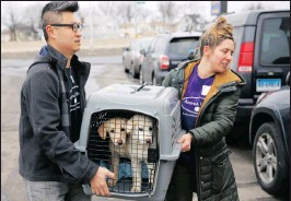 ?? PICTURE: AP ?? A crate with two puppies rescued from a South Korean dog meat farm are loaded on to an animal transport vehicle near Kennedy Airport by Animal Haven workers yesterday.