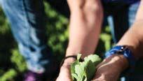 ?? FOTO: YLVA BERGMAN ?? ODLING. På Garnisonens tak kommer det snart att odlas grönsaker och växter.